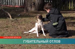 Службы отлова застрелили собаку на глазах у ребёнка! Как такое могло произойти?